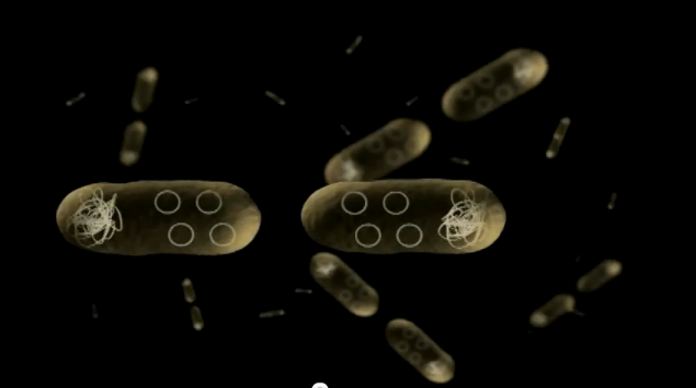 How plasmids are made using fermentation