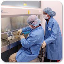 Technicians work in a hood to produce a cell bank
